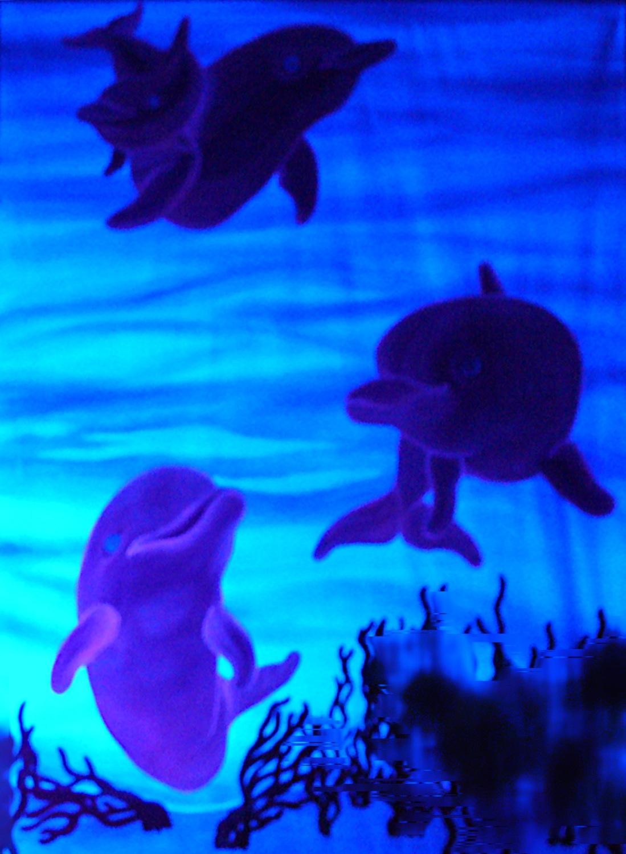 Delfines Luz Negra